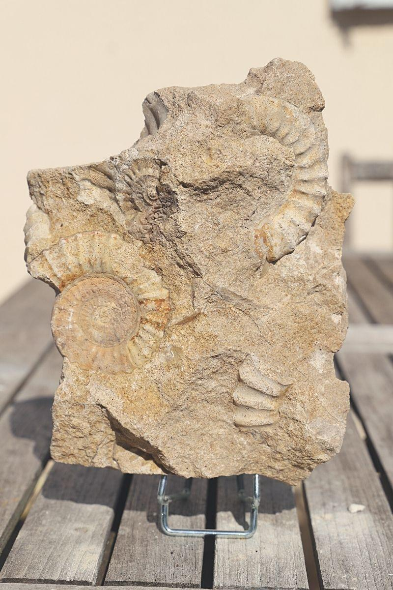 Bloc ammonite